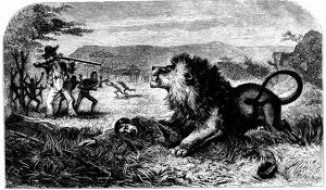 David Livingstone (1813-1873) saved from a lion by Mebalwe, a native school master